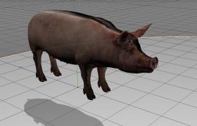 白白胖胖的大耳肥猪农村家禽C4D模型(支持c4d,obj,fpx,3ds,max)