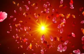 金色光点耀眼旋转彩色花瓣绚丽飞舞HD特效视频素材