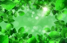 清新綠葉中穿梭夢幻光斑點綴森林美景特效視頻素材