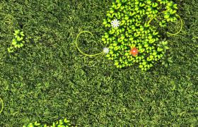 綠蔭草地清新花藤生長夢幻森林特效視頻素材