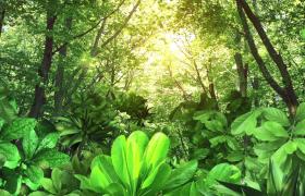 夢幻森林清新呈現綠色熒光粒子上升動畫特效視頻素材