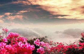 花朵山頂唯美生長天空瞬息萬變LED舞臺背景視頻