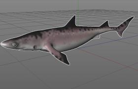 远古生物灭绝物种深海SHARK鲨鱼Cinema4D模型