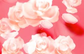 淡红光效背景美丽鲜花附带柔光粒子漂浮MP4婚庆告白视频素材
