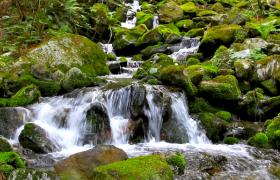 山间小水流青苔石上流淌清新山景实拍视频素材