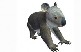 澳大利亞珍貴原始樹棲動物樹袋熊koala考拉3D模型(obj,stl)