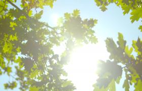 仰拍视角绿叶下移动阳光忽隐忽现唯美风景实拍视频素材
