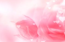粉色鮮花背景裝飾白色愛心夢幻漂浮婚慶戀愛視頻素材