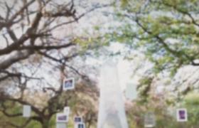 吊挂在树上的彩色照片动画展示AE模板