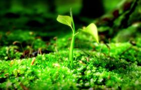 嫩葉水滴滑落花種快速滋潤盛開植物生長動態特效視頻
