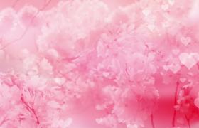 粉色情調爛漫櫻花動態愛心演繹夢幻意境MOV婚禮特效視頻