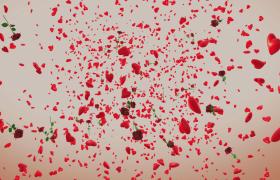玫瑰花束伴随红心空间感掉落浪漫效果婚礼情人节4k特效视频