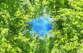 仰視藍天視角綠樹葉中上升漂浮MOV唯美清新視頻