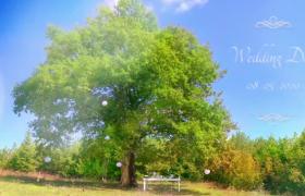 清新树林户外风景动态预设场景美好电子相册展示ae模板参考