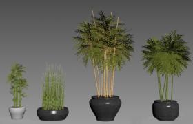 3D竹子盆景绿色观赏性桥本木植物模型展示(max)