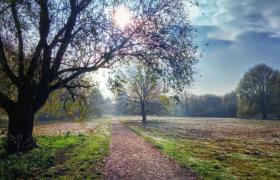 視頻素材-唯美粒子前景自然風光林間小道視頻素材