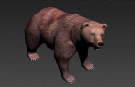 陆地上最大的食肉类哺乳纲熊科动物棕熊Ursus arctos 3D model下载