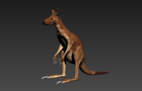 食草性无脊椎野生动物澳大利亚袋鼠3D模型(含贴图)