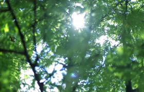 夏日森林風光唯美展示旅游類演繹景點介紹大自然展示開場片頭視頻素材