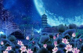 光效素材-蝴蝶纷飞西湖夜景荷塘月圆视频素材