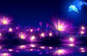 晚会素材-荧光屏幕唯美圣神荷塘蝴蝶古典舞台视频素材