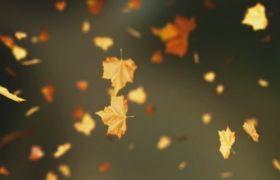 植物素材-自然枫树叶掉落梦幻既视感动态背景视频素材