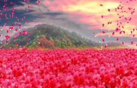 植物素材-高清满山杜鹃花飞舞粒子舞台演出开场视频背景素材