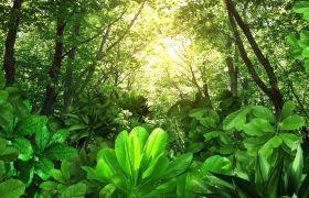 植物素材-自然清新树林金色光芒浮动晚会汇演动态视频背景素材