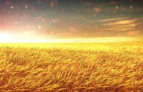 舞臺素材-唯美炫光金色大氣麥浪舞臺背景視頻素材