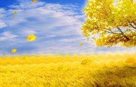 植物素材-金色麦田落叶飘落秋天景象动态背景视频素材