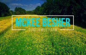 植物素材-唯美向日葵大自然庄园宣传展示背景视频素材