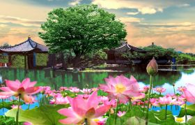 自然風光-典美中國風江南風荷塘高清自然風光視頻背景