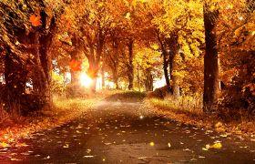 自然風光-金色秋天楓葉落葉自然風光合成背景素材