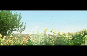 自然风光-3D动画清新唯美植物花草合成视频背景素材