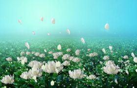 植物素材-清新白色茉莉花海典美LED背景视频素材