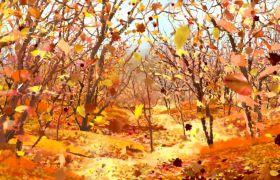 晚会素材-唯美秋季枫叶掉落景象晚会动态背景视频