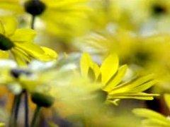 花渐开花渐变花满地 草生长标清实拍素材