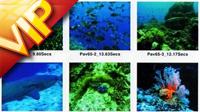 視頻素材 動態影視素材 AE視頻素材 數碼影像動態素材庫 40GB