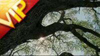 大树 阳光透过树枝 高清实拍视频素材