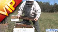 养蜂人放养蜜蜂?#23433;?#38598;蜂蜜过程
