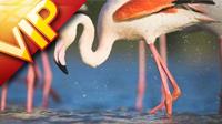 世界自然基金会-动物与人类的相处