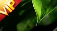 樹葉滴水特寫高清實拍視頻素材