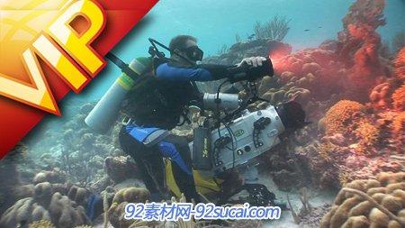 摄影师潜入海底拍摄海地生物高清实拍