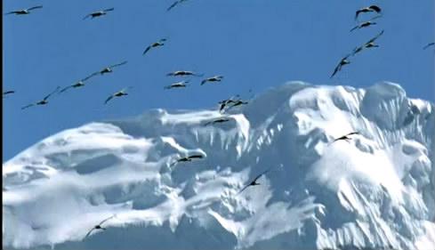 12個雪山雪景 自然風光風景云霧繚繞山頂標清實拍視頻素材