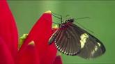 美丽的多彩花蝴蝶 蓝色蝴蝶飞起 橙色蝴蝶特写高清实拍素材
