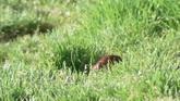 心爱的小鸟草丛特写高清实拍视频素材