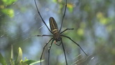 蜘蛛爬在蜘蛛网上特写镜头 高清实拍素材