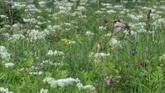 小鸟飞翔花丛特写吃昆虫镜头3个高清实拍视频素材