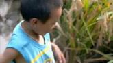 少数民族儿童奔跑下水稻田愉快的捕捉田里的鱼高清实拍视频素材