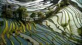 梯田风光美景 插秧水稻成熟收割 高清实拍视频素材